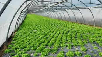 Agriculture & Hydroponics Industries